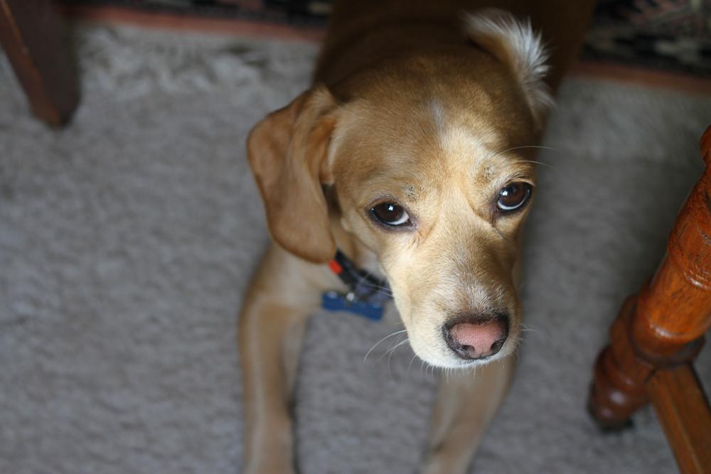 jackielay_dogs4_09