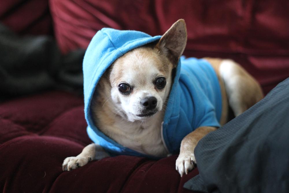 jackielay_dogs4_12
