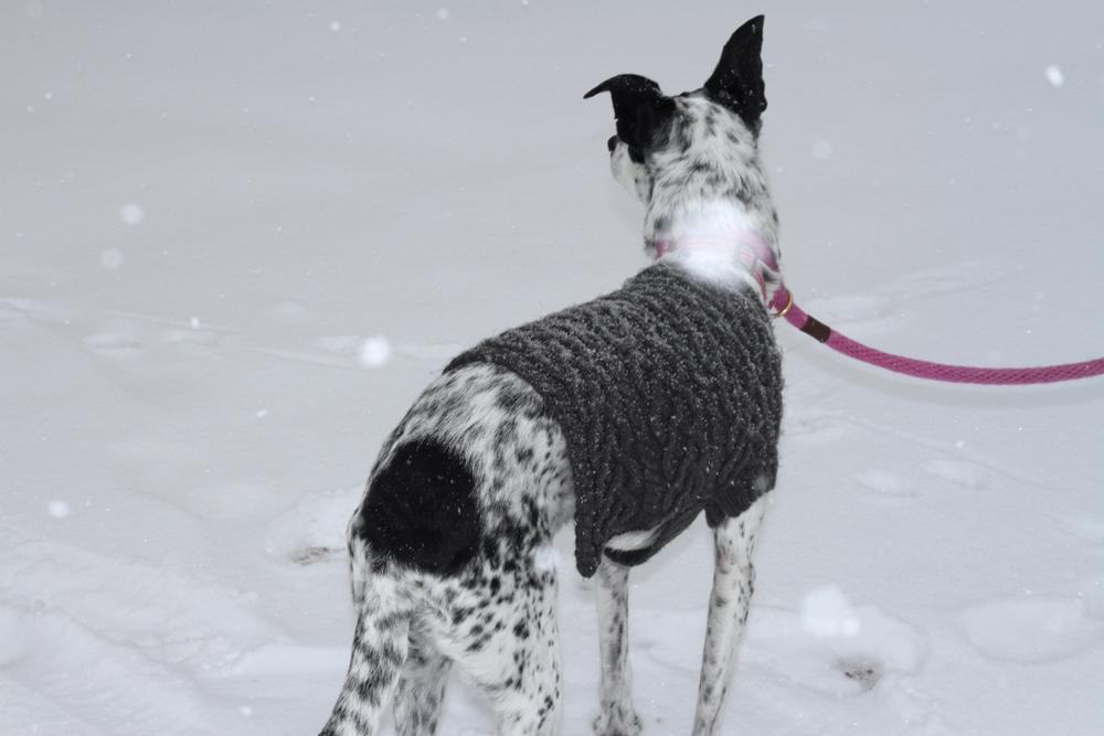jackielay_dogs5_07